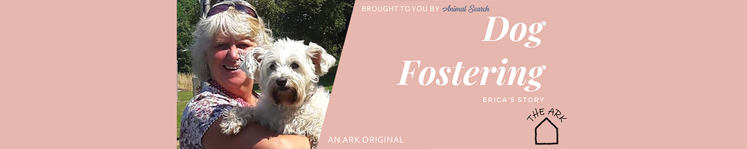 Could You Foster a Dog?