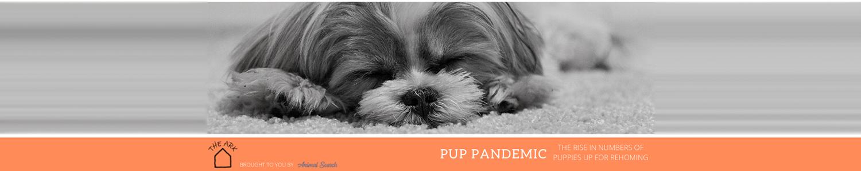 Pup Pandemic